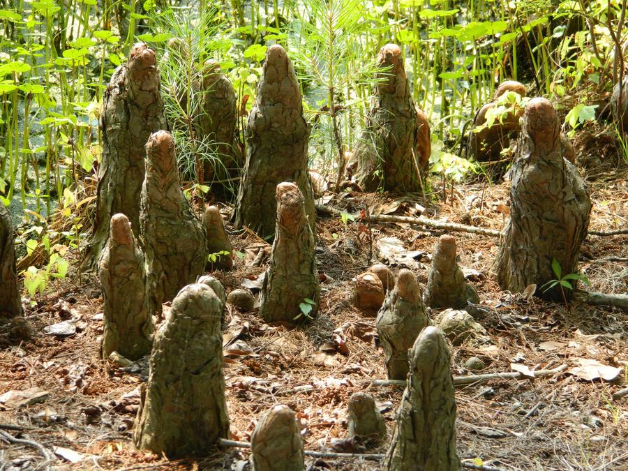 Cypress Knobs by JennyM-Pics