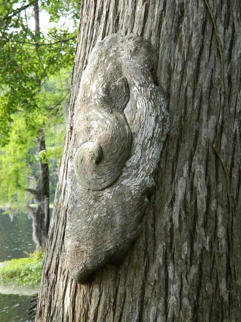 Pretty Tree Growth by JennyM-Pics