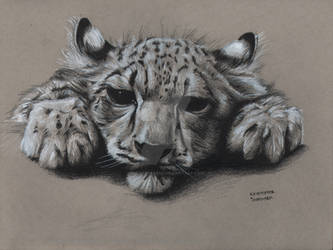Snow Leopard - Fur Study