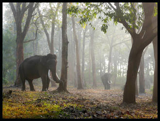 elefants in the mist