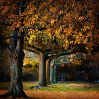 Autumn Sun by Mo-Nabbach