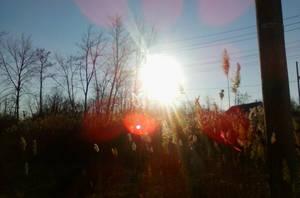 Sun reeds by BndDigis