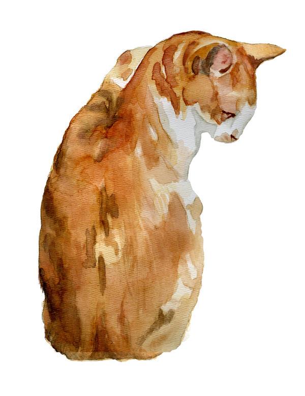 Orange Watercolor Tabby Cat by ryliecat