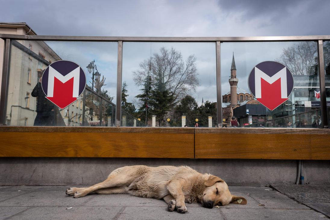 Metro Dog by niklin1