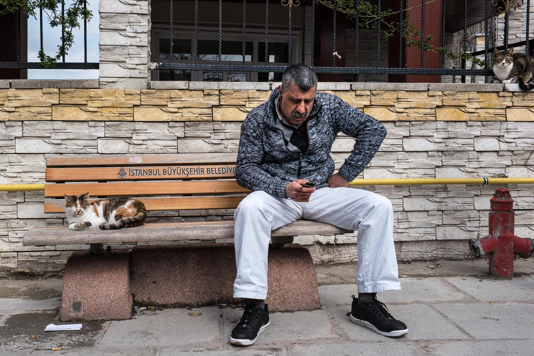 A Man and Two Cats by niklin1