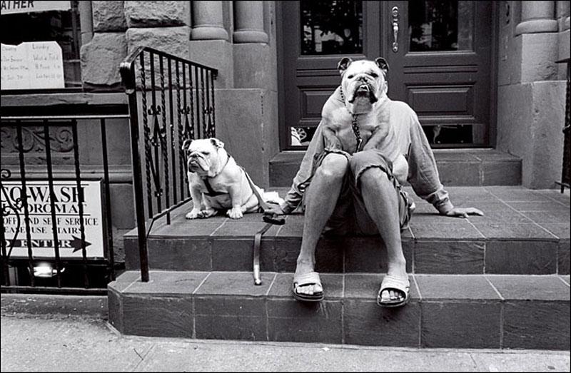 Erwitt Bulldog by niklin1
