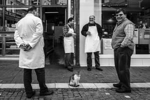 Four Men and a Cat by niklin1
