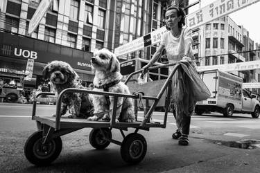 The Dog Cart by niklin1