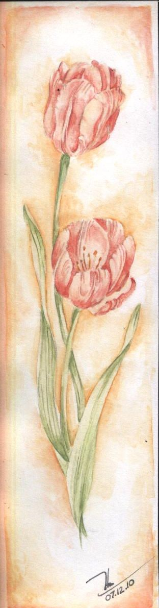 tulip by MayMercy