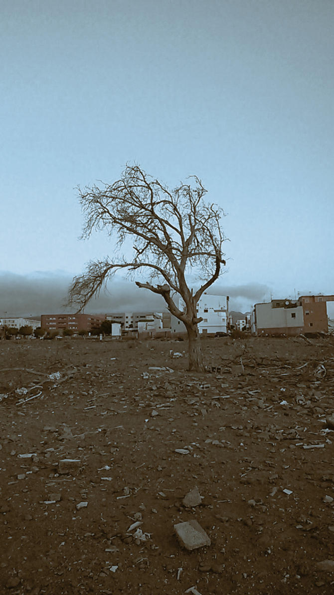 Isolation by TEFpestana