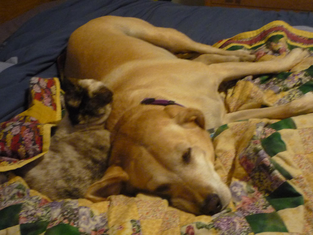 Sleepy Lucky and Minnie by Sanluris