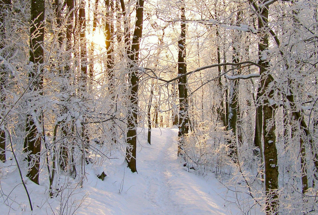 Snowy Forest by Lhox