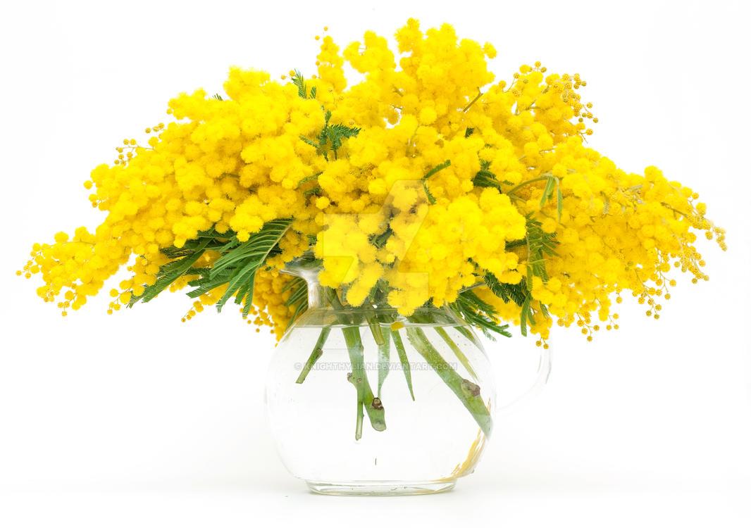 mimosa by KnightHylian