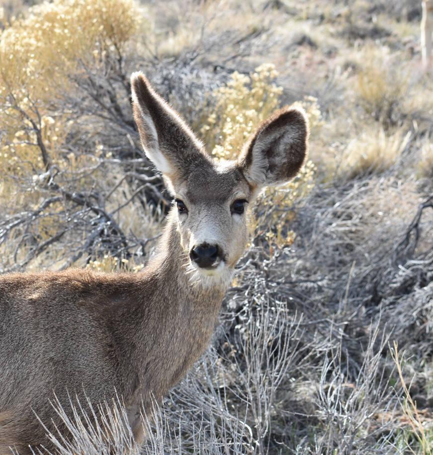 deer 2 by KittyDarklore