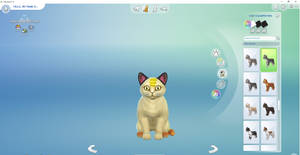 When i play sims 4 cats and dogs