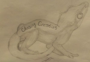 chasing-cresties's Profile Picture