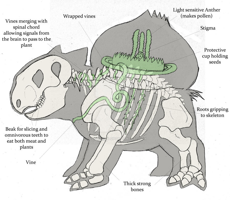 Bulbasaur- Anatomical study by JoshuaDunlop