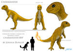 Charmander reference sheet