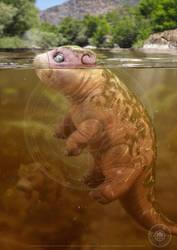 Slowpoke Underwater