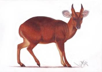 Barking deer by LindaColijn
