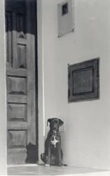Garvao Dog