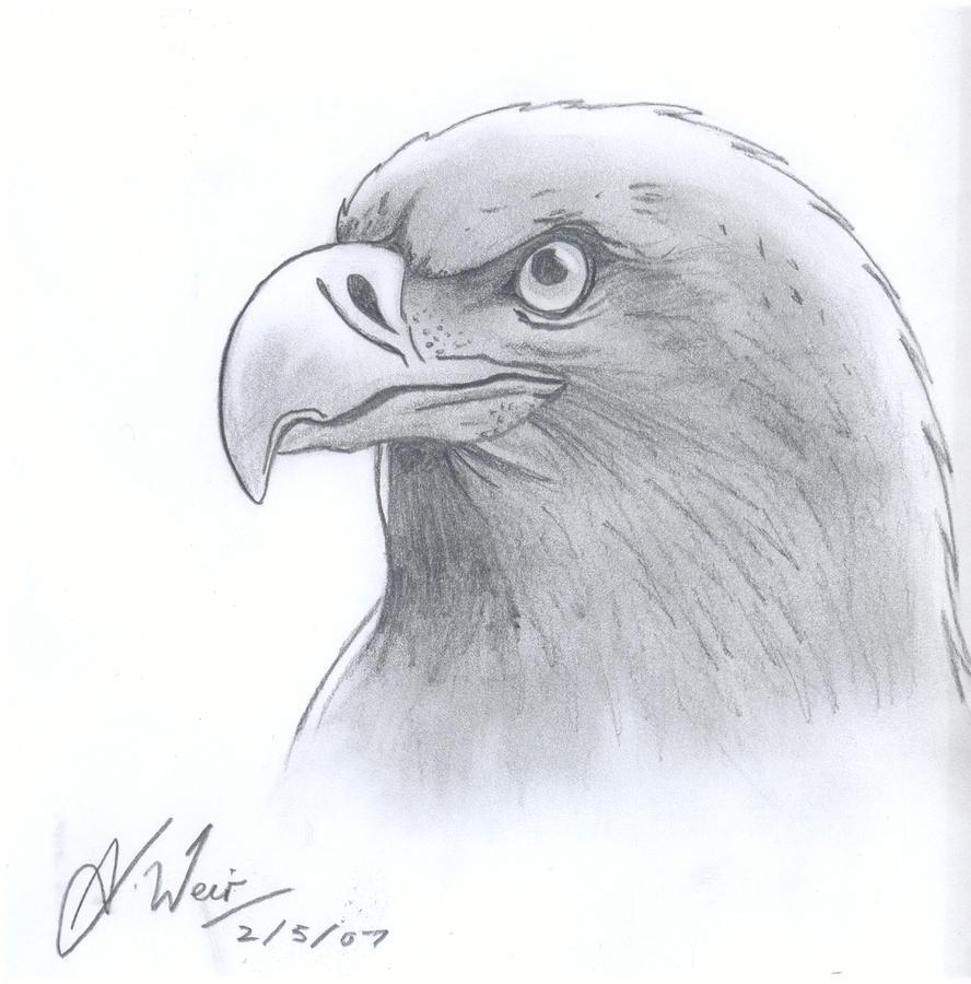 Bald Eagle sketch by DimentionDragon on DeviantArt