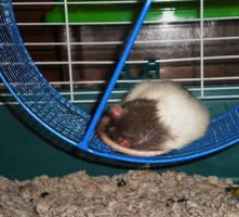 asleep in the wheel by purpledragonmaster