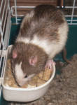 eating in the bowl---bandit