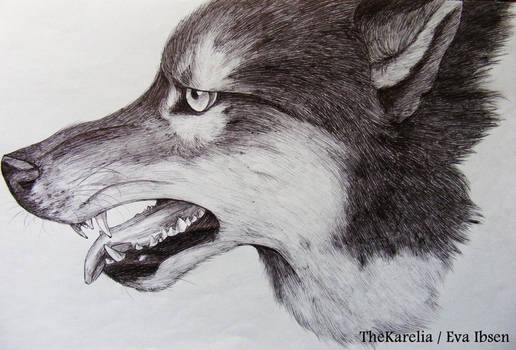 Face of Wolf