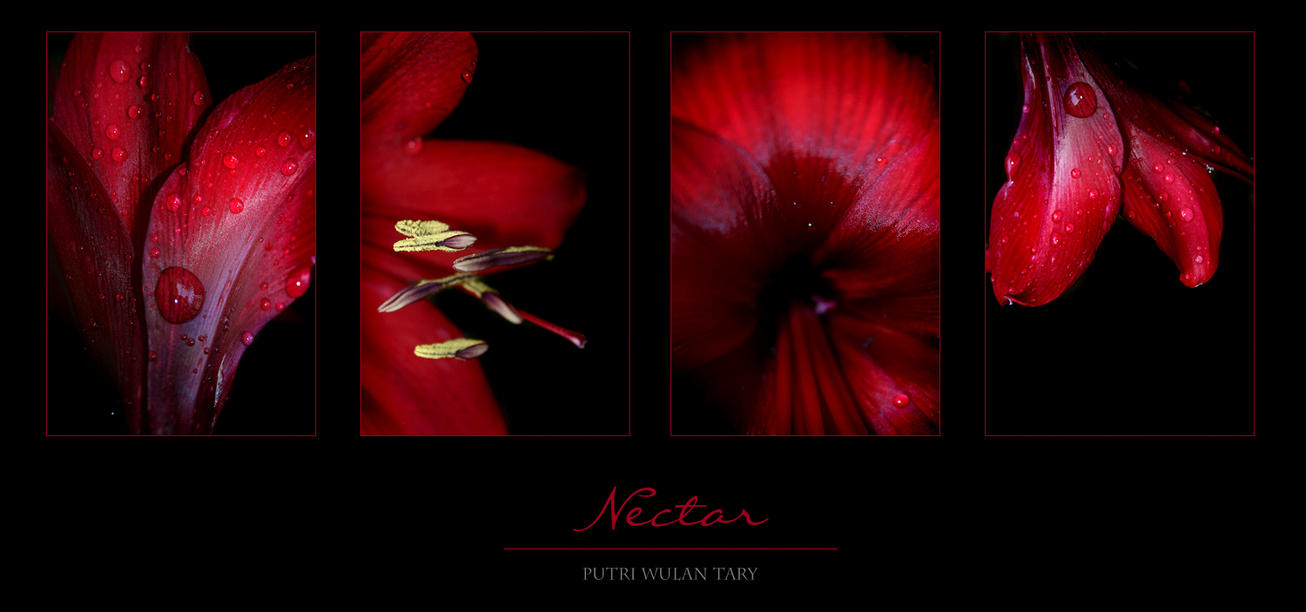 Nectar by poetry2capullet