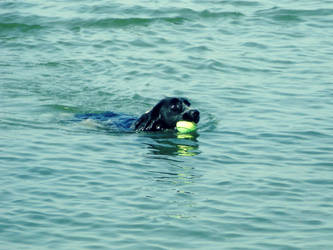 A Swimming Dog by Angelus-Fallen
