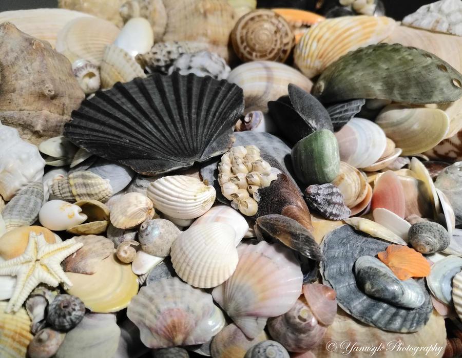 SeaShells by Angelus-Fallen