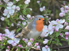Needle felted European robin by Hillamer