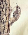Needle felted Eurasian treecreeper