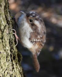 Needle felted Eurasian treecreeper 2 by Hillamer