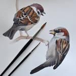 Sparrows WIP