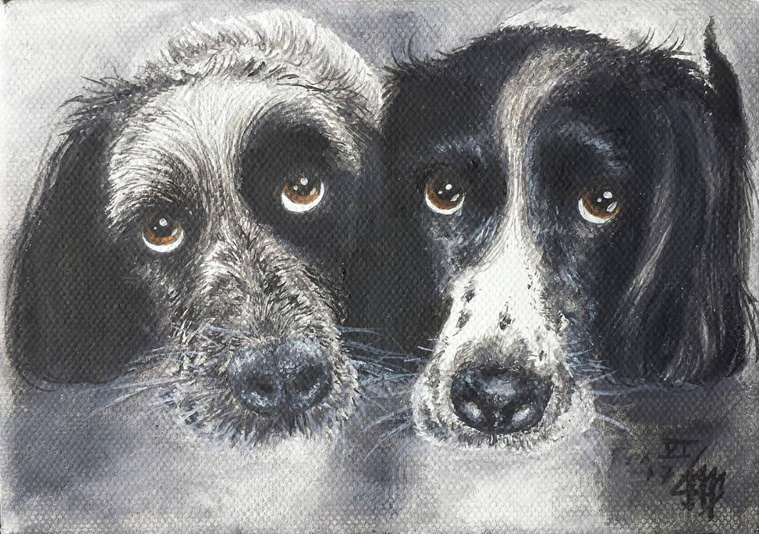 Haushund 'Flash und Leon' (Canis lupus familiaris)