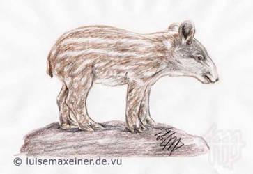 South American Tapir by luisemaxeiner