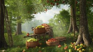 Harvest Time by Cean-Herzfield