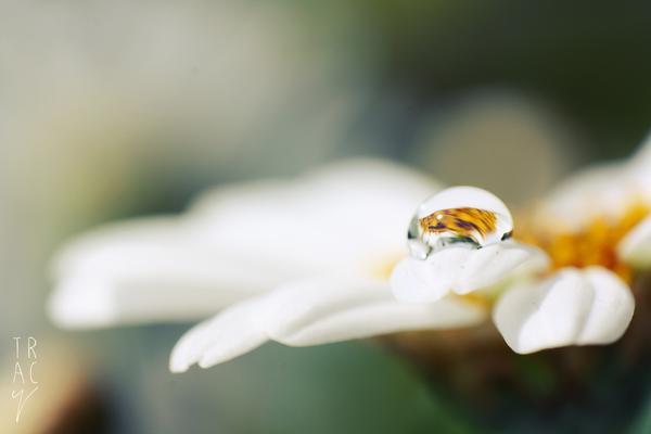 Flower Drop by enohla
