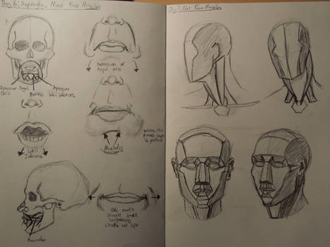Day 6 and 7: Face Muscles And Not Face Muscles