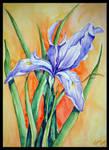 Mountain Lily watercolour