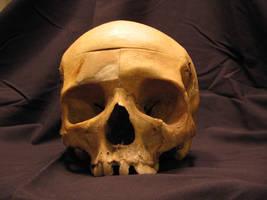 Skull 4 by Hjoranna