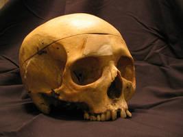 Skull 8 by Hjoranna