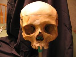 Skull 26 by Hjoranna