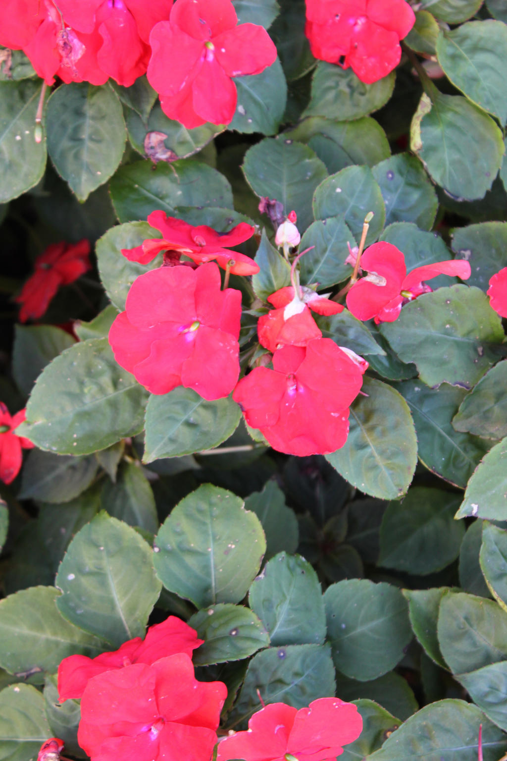 Flowers by Hjoranna