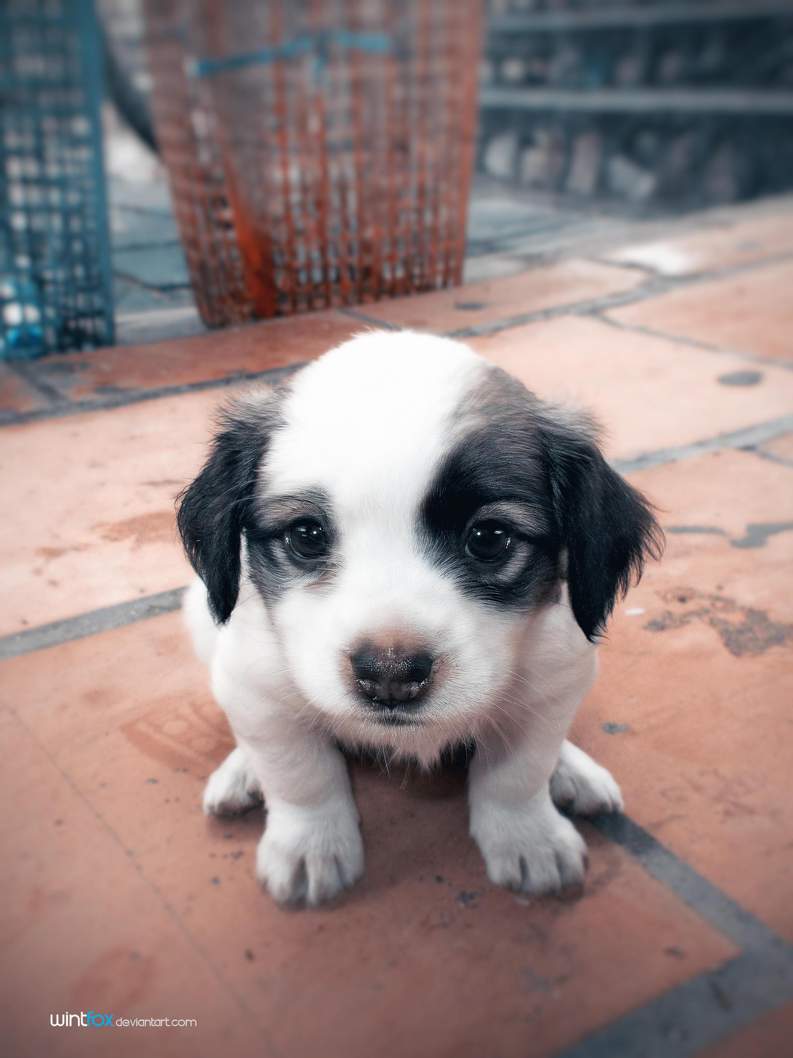 Puppy by Wintfox