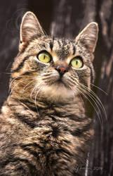 My cat, Oscar 2019