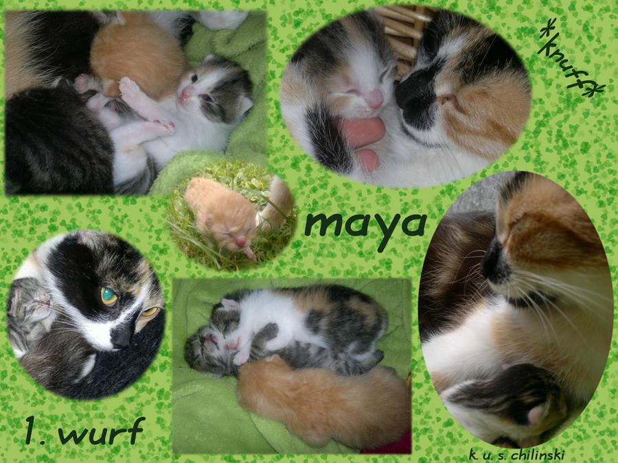 mayas  first babys by kati-kopa