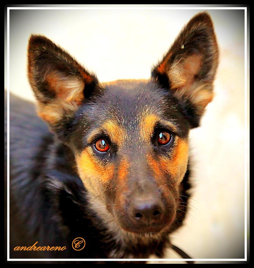 Doggies eye by andreareno
